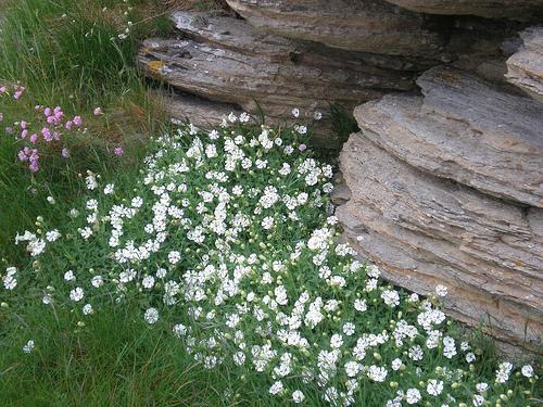 Cliffside flowers
